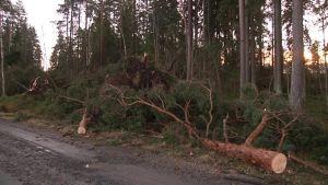 Myrskyn kaatamia puita tien varressa