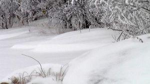 Lumen täytyy kinostua, että norppa pääsee pesänrakennus puuhiin.