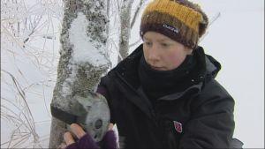 Tutkija Miina Auttila kiinnittää valvontakameraa puunrunkoon