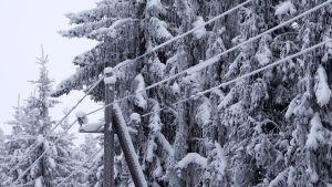 Lumiset puiden oksat lähes tapaavat sähkölankoihin