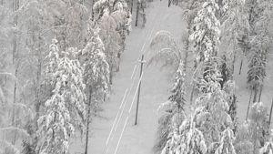 Ilmakuva lumisesta kuusimetsästä. Sähkökaapelilinja kulkee metsän poikki.