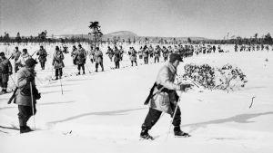 Ruotsalaisten vapaaehtoisten hiihtokomppania Märkäjärvellä 1940