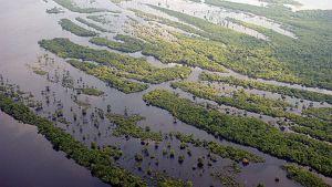 Ilmakuva Amazon-joen suistosta ja sen varrella olevasta sademetsästä.