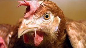 Kana.