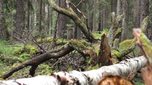 Kansallispuiston metsää