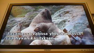 Luonto-ohjelman käännös televisiossa.