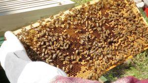 Mehiläiskenno