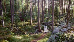 Koloveden kansallispuiston luontopolku.