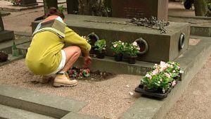 Kesätyöntekijä istuttaa kukkaa.