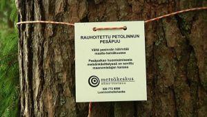 Rauhoitettu petolinnun pesäpuu -kyltti puun kyljessä