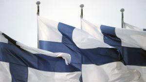 Suomen liput liehuvat saloissa.