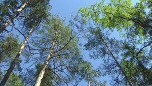 Puita metsässä