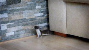 Kärppä saattaa luikahtaa sisälle asuntoon sopivan tilaisuuden tullen. Pienikokoinen eläin pujottelee sujuvasti huonekalujen välissä.