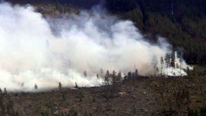 Metsäpalo hakatulla alueella.