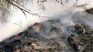 Tulipalon tuhoamaa maastoa.