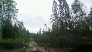 Tielle kaatuneita puita.