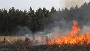 Palomiehet sammuttavat maastopaloa