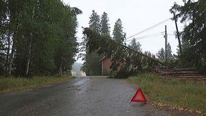 Sähkölinjojen päälle kaatunut puu