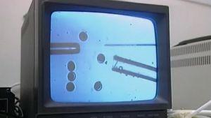 Televisionäytöllä mikroskoopin kautta otettua kuvaa tutkijan laboratoriossa käsittelemistä kantasoluista.