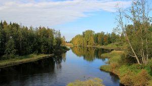 Kuvassa Lestijoen rantaa Toholammilla