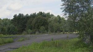 Puiden ja pensaiden valtaama Länsi- ja Itä-Berliinin rajalla sijainnut Checkpoint Bravo -rajanylityspaikka.