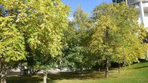 Näkymä Lappeenrannan arboretumista, oikealla vesitorni.