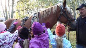 Kuvassa lapset taputtavat hevosta
