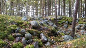 Kivikko Hangossa.
