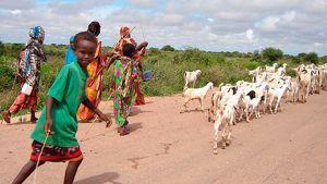 Somalialainen perhe vuohineen.