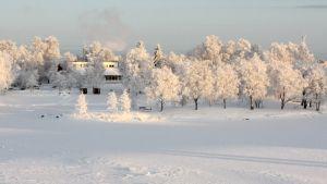 Karjalantalo kuuraisten puiden ympäröimänä Ilosaaressa Pielisjoen rannalla.
