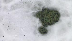Reikä jäässä Brahen kentällä.