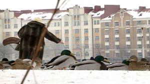 Nainen ruokkii sorsia Helsingin Tokoinrannassa.