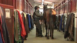 Nainen hoitaa hevosta tallissa.