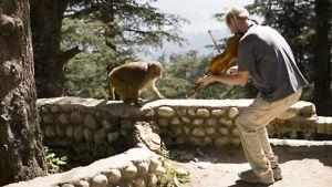 Teemu Kupiainen soittaa aidan harjalla kiipeilevälle pienelle apinalle