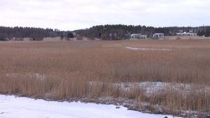 Turun ja Kaarinan rajalla sijaitsevaa arvokasta lintulahtea uhkaa ruovikoituminen.