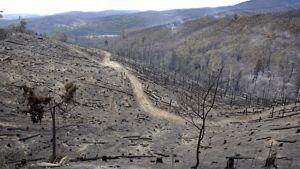 Palanutta metsää Jeeralong Westissä Australiassa.