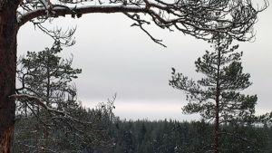 Pilvinen taivas laskeutuu metsän ylle