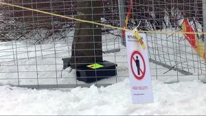 Rottia pyydystetään Tampereen Sorsapuistossa.