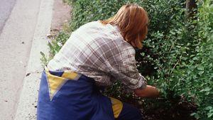 Nuori punatukkainen nainen kitkee rikkaruohoja pensaiden juurelta