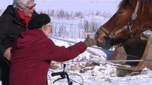 Naiset syöttävät hevosta talvimaisemassa