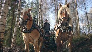 Hevosia metsätöissä