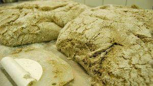 Hyvin noussutta ruisleipätaikinaa ProAgria Etelä-Pohjanmaan leipäkurssilla.