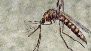 Dengue-kuumetta levittävä moskiitto