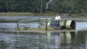 Vesikasvien niittokone työskentelee järvellä.