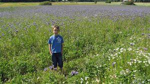 Poika kukkivan pellon laidalla