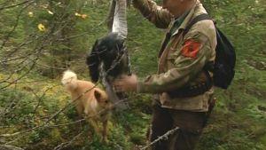 Metsästäjä, koira ja metsäkanalintu.