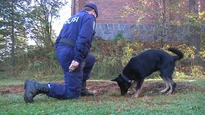 Poliisi ja poliisikoira etsintäharjoituksessa