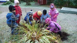 Päiväkerholapset istuttavat kukkasipuleita