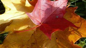 Syksyllä eivät kaikki ehdi lomailla