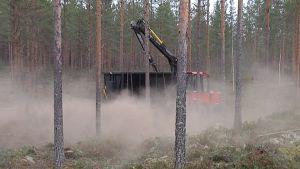 Metsäkone levittää tuhkaa metsään.